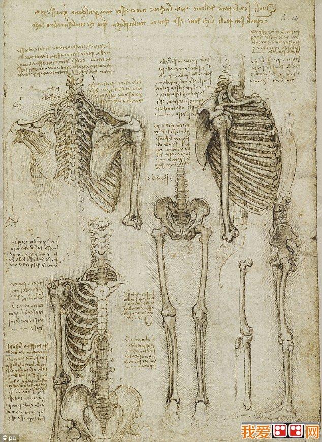 """达芬奇人体解剖素描手稿作品欣赏 达·芬奇少年时已显露艺术天赋,15岁左右到佛罗伦萨拜师学艺,成长为具有科学素养的画家、雕刻家。并成为军事工程师和建筑师1482年应聘到米兰后,在贵族宫廷中进行创作和研究活动,1513年起漂泊于罗马和佛罗伦萨等地。1516年侨居法国,1519年5月2日病逝。小行星3000被命名为""""列奥纳多""""。最著名的作品是《蒙娜丽莎》现在是巴黎的卢浮宫的三件镇国之宝之一。"""