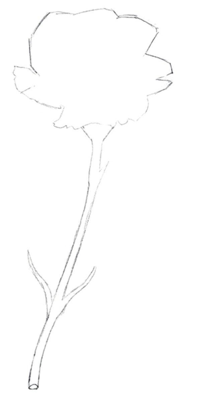 彩铅康乃馨的绘画步骤