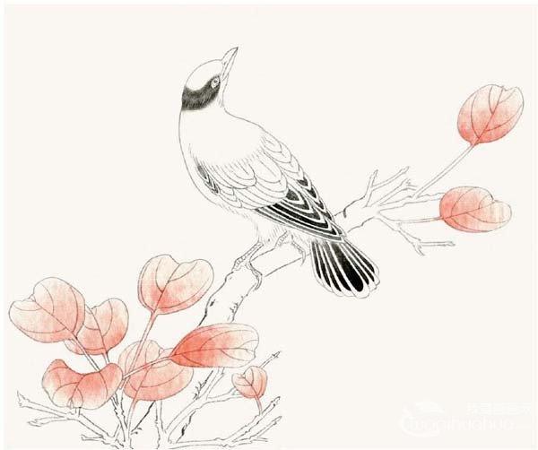 黄鹂鸟入门绘画教程