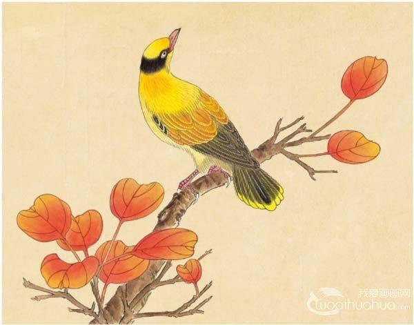 工笔黄鹂鸟入门绘画教程_国画教程_学画画_我爱画画网
