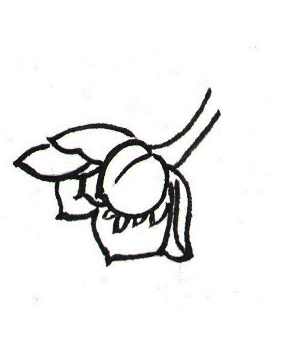 国画简笔画-国画白描兰花绘画步骤教程