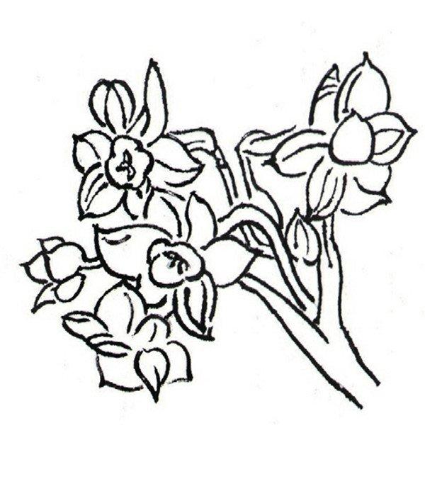 画白描兰花绘画步骤教程图片