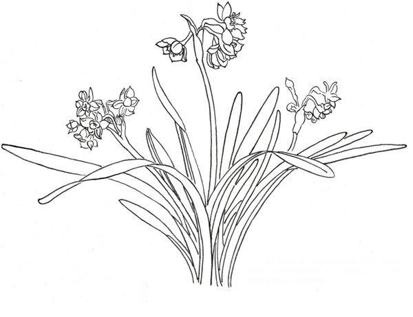 点   在画兰花的时候,花瓣的形态 10、一组叶子的画法图片