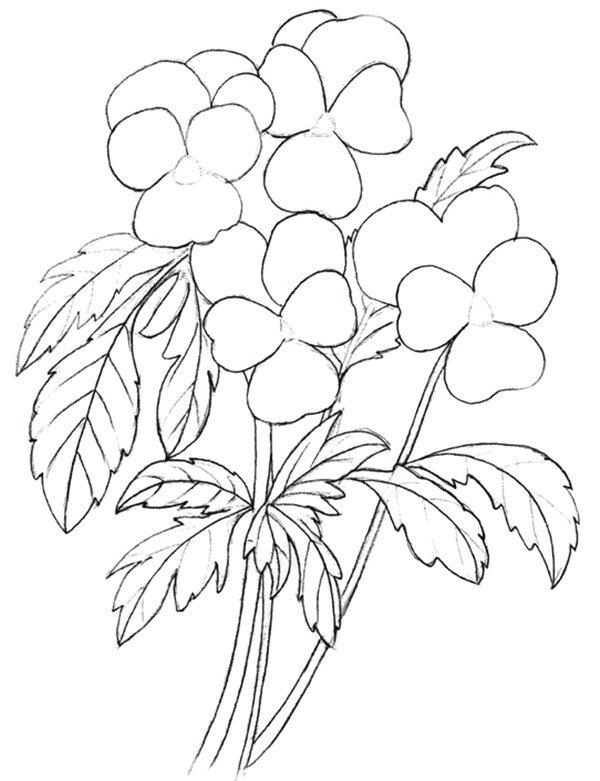 彩铅三色堇的绘画教程(3)