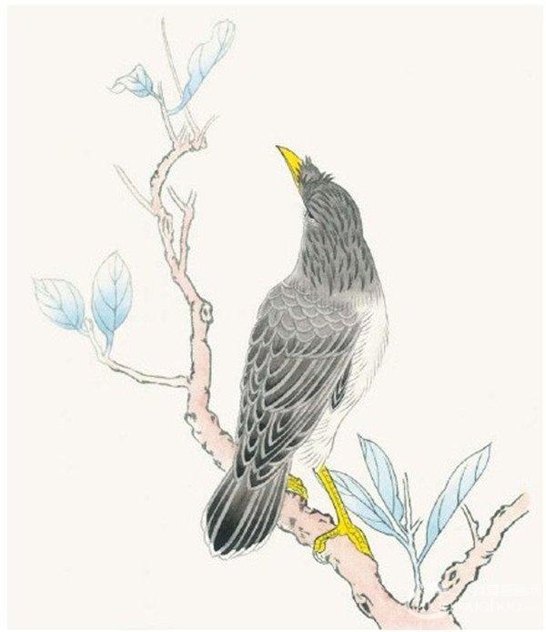 工笔画花鸟入门 工笔画八哥的绘画教程 3