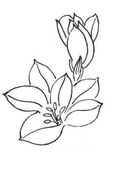 学画花朵图片步骤
