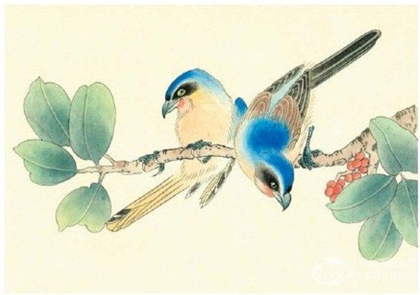 第三步:用酞青蓝分染头、背部,花青分染嘴、叶子,平染脚,用淡朱磦和淡藤黄分染耳羽、颌下羽和腹部、尾部。  伯劳工笔画绘画步骤四 第四步:用深栗色罩染鸟的中复羽,用较深的墨罩染鸟的硬羽和尾羽,三绿罩染树叶,朱磦分染小红果。  伯劳工笔画绘画步骤五 第五步:用白色分染鸟的眼部、腹部,并勾出鸟的羽轴,分别用酞青蓝、赭石、淡朱磦、中墨在相应的部位丝毛。