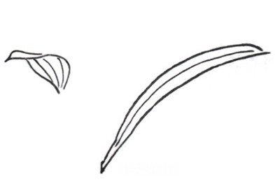 飘落的树叶花瓣的简笔画