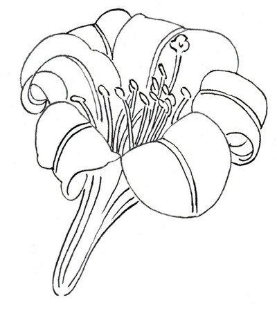 1、花蕊的画法   百合花白描局部二   2、花骨朵的形态   3、一株花   图片
