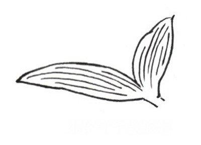 白描百合花绘画步骤(2)