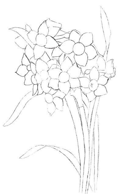 学画画 水粉画教程 水粉静物画 > 水粉植物画入门技法:水仙花的绘画