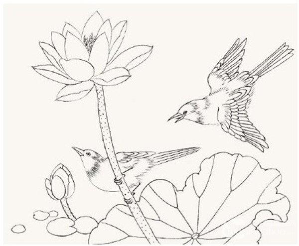 工笔画入门脊苓鸟的画法图片