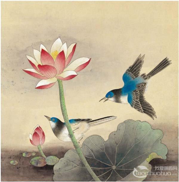 脊苓鸟绘画步骤五    第五步:用白色分染鸟的颌下白羽,腹羽和荷花