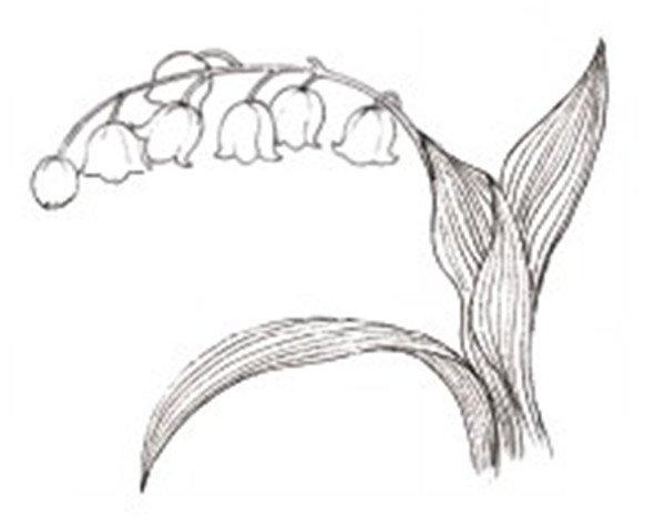 铃兰花水粉画绘画步骤三