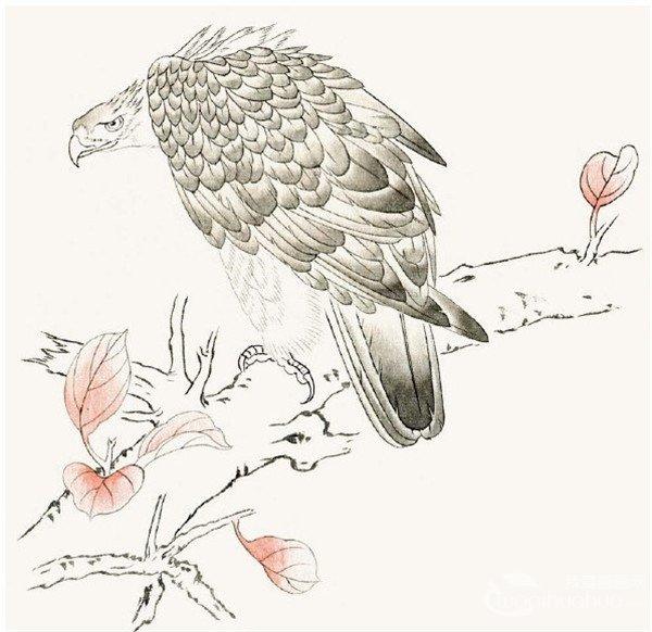 工笔画老鹰绘画步骤    第一步:用重墨勾嘴,眼,脚,硬羽和树的枝干