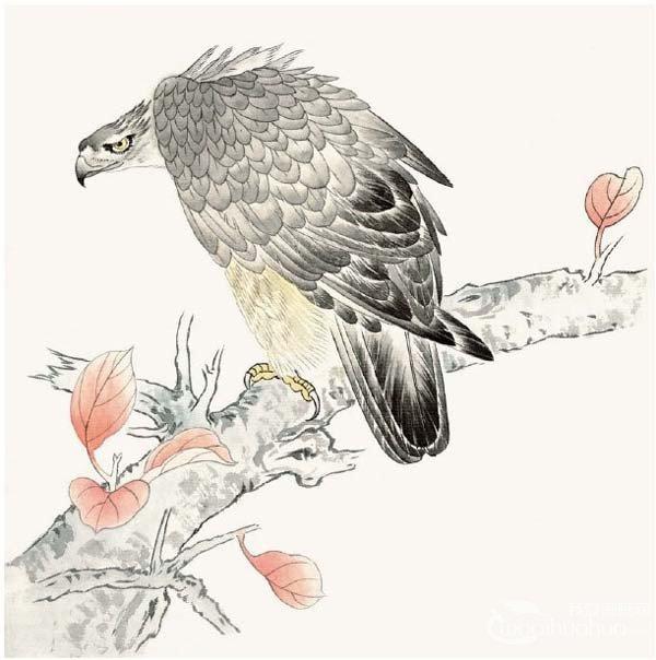 工笔画入门老鹰的绘画步骤