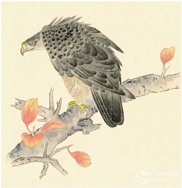 工笔画入门老鹰的绘画步骤(2)