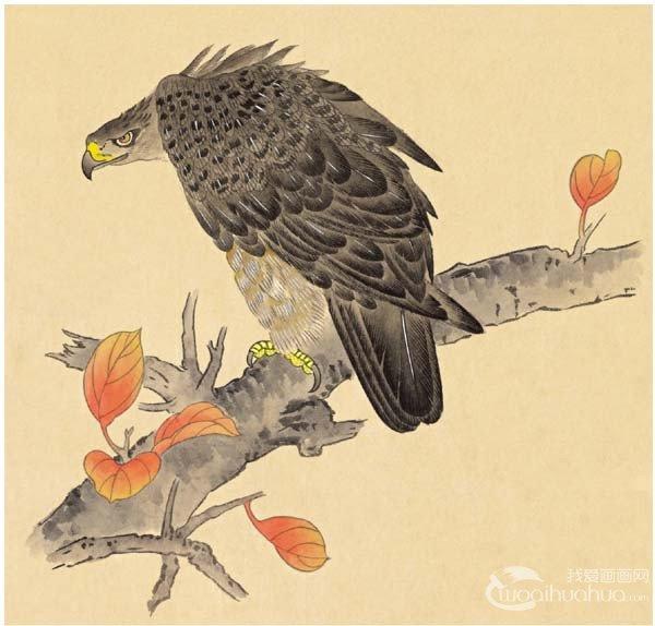 工笔画入门老鹰的绘画步骤 2