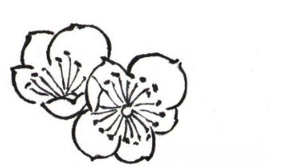 白描梅花的绘画步骤图片