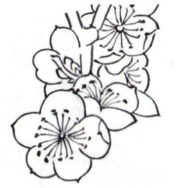白描梅花的绘画步骤 2