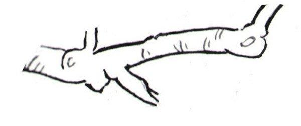 白描梅花的绘画步骤(4)