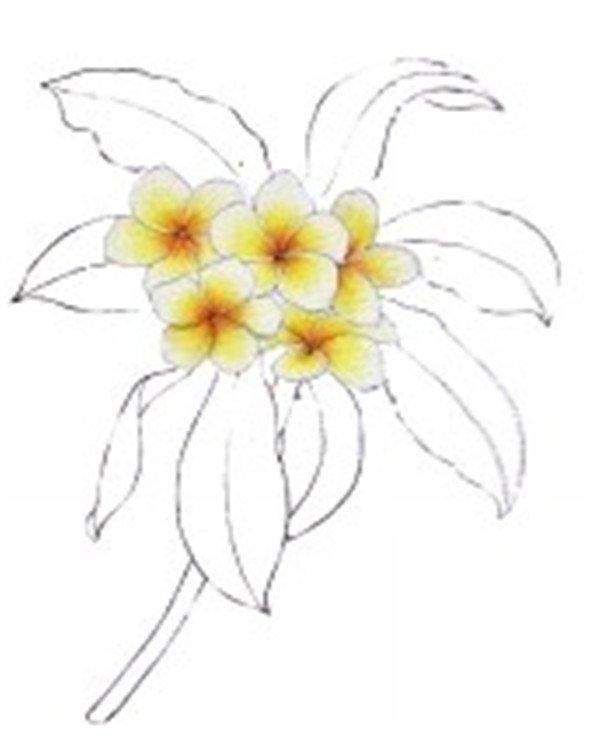 水粉鸡蛋花的绘画教程(2)_水粉画教程_学画画_我爱