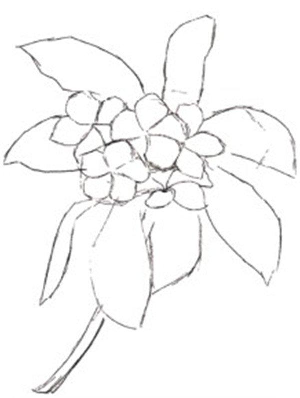 水粉鸡蛋花的绘画教程(4)