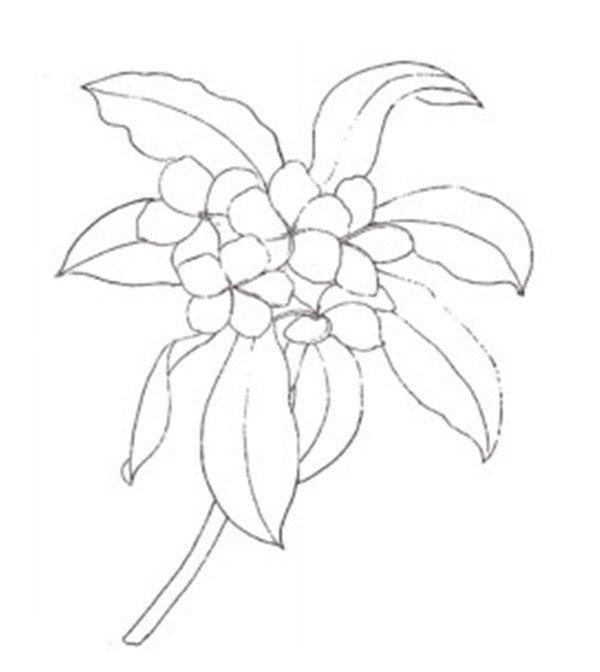 三,实战演练    1,使用2b 铅笔画出鸡蛋花的大致外形,将所有花瓣