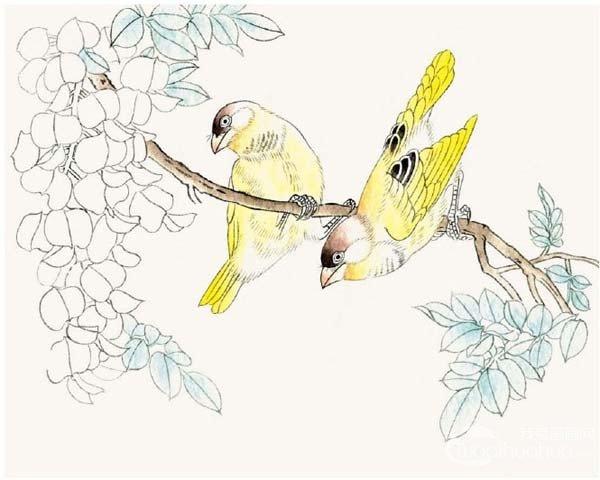 工笔画芙蓉鸟的绘画入门步骤教程(2)