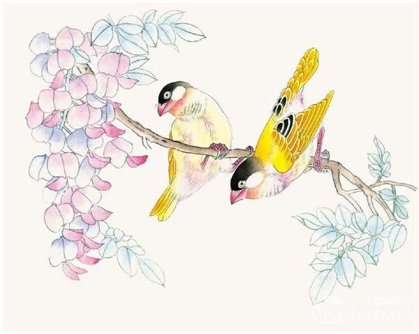 工笔画芙蓉鸟的绘画入门步骤教程(3)