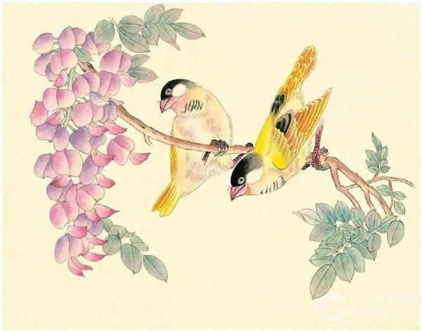 工笔画芙蓉鸟的绘画入门步骤教程 4