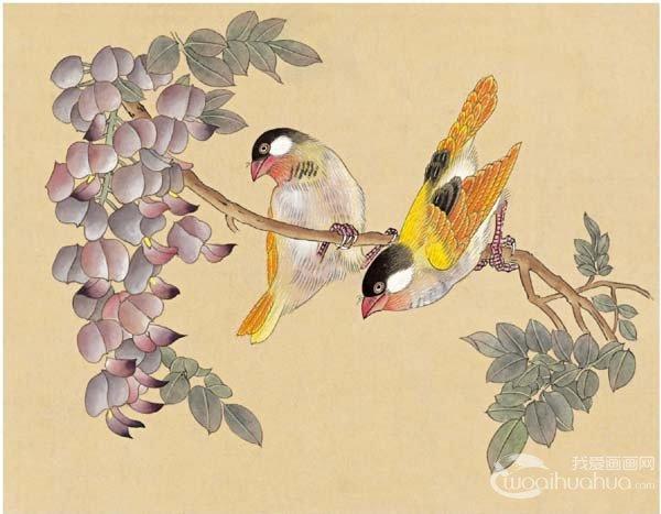 工笔画芙蓉鸟的绘画入门步骤教程(5)_国画教程_学画画