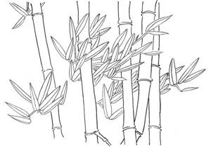 白描竹子的绘画技法