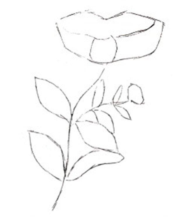水粉金银花的绘画技法(4)