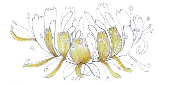 水粉金银花的绘画技法(5)