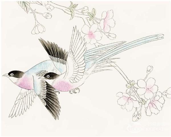 工笔绶带鸟的绘画步骤入门教程(2)_国画教程_学画画