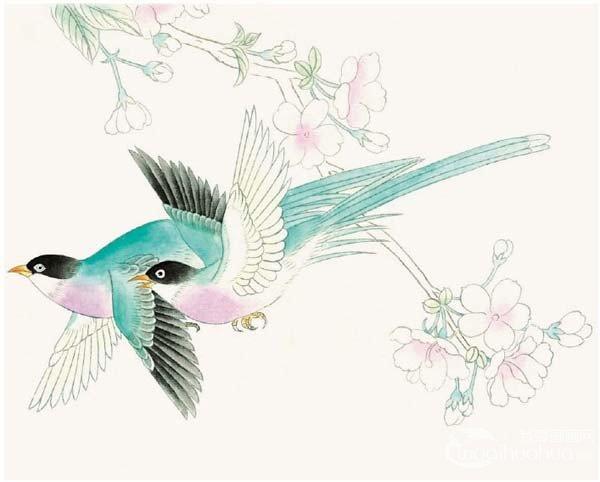 工笔绶带鸟的绘画步骤入门教程(3)_国画教程_学画画