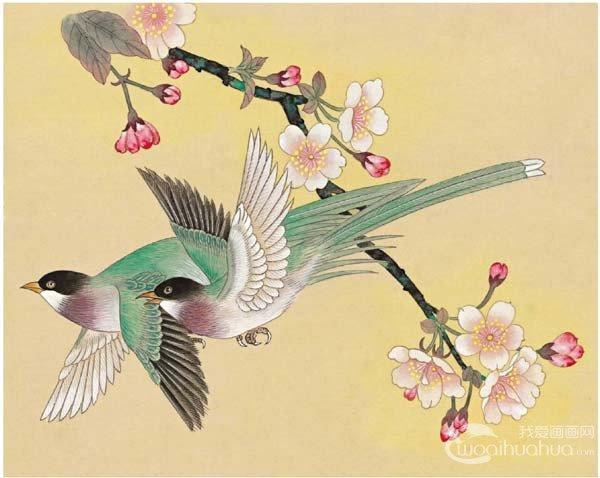 工笔花鸟画绶带鸟绘画步骤教程-工笔绶带鸟的绘画步骤入门教程 5