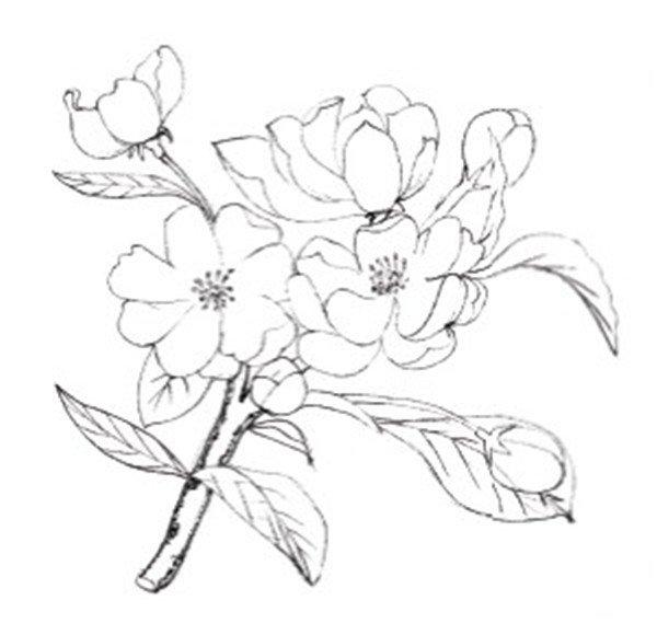 简单铅笔手绘花朵图片