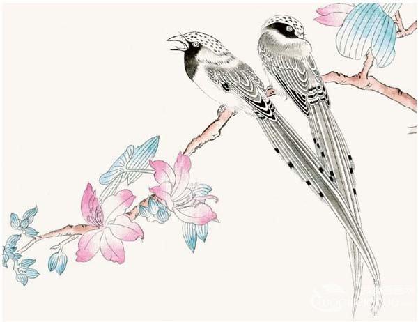 工笔禽鸟画:工笔红嘴蓝雀的绘画步骤教程(2)