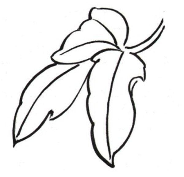 叶子图案简笔画