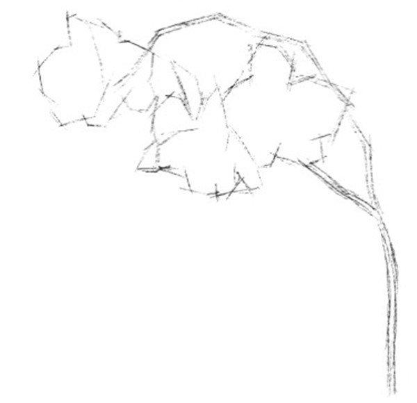 三,实战演练    1,使用2b铅笔画出兰花的大致外形
