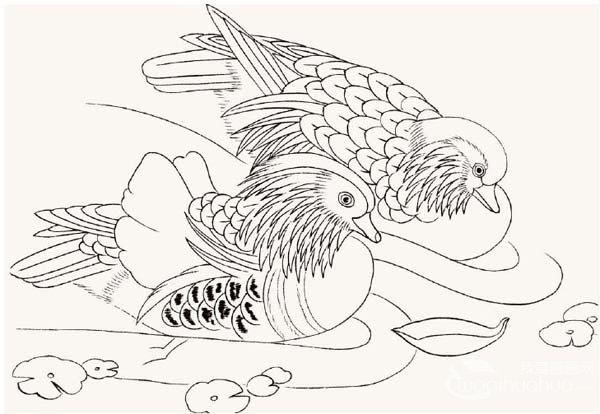 工笔画鸳鸯的绘画入门步骤教程