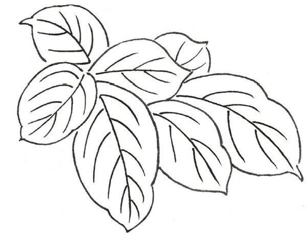 白描月季花的绘画步骤 2