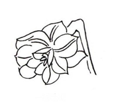 国画教程 工笔画 > 白描水仙的绘画步骤      水仙,又名中国水仙,是多