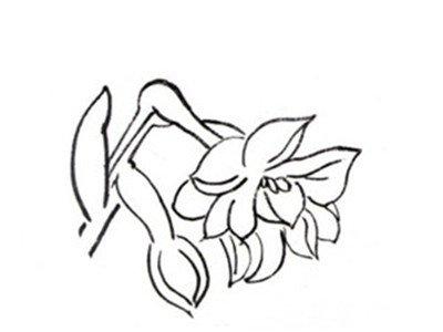 工笔画 > 白描水仙的绘画步骤      水仙,又名中国水仙,是多花水仙的