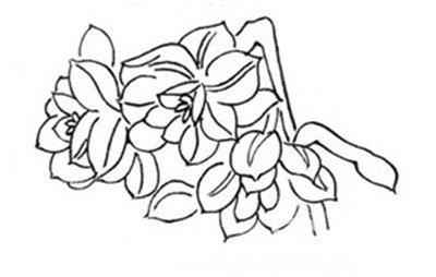画画花朵图片素描图片-白描水仙的绘画步骤图片