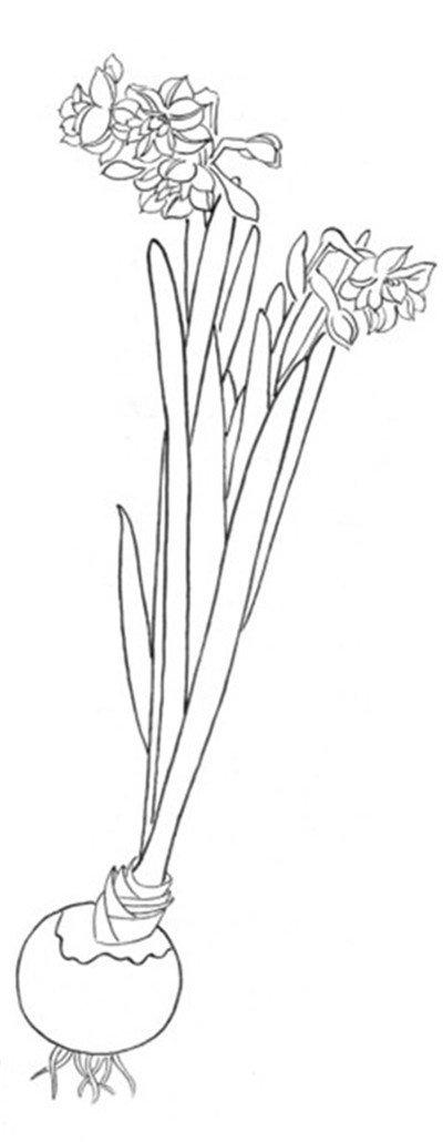 白描水仙的绘画步骤(3)_国画教程_学画画_我爱画画网