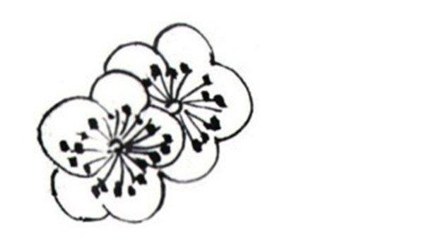 学画画 国画教程 工笔画 > 白描红梅的绘画技法      红梅是梅花的一