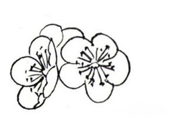 梅花朵简笔画大全-白描红梅的绘画技法